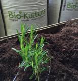 biologische potgrond Bio-Kultura